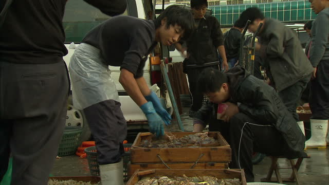 exterior shots of people buying and selling live shellfish including live prawns and crabs at a beijing fish market fish market in action in beijing... - prawn animal点の映像素材/bロール