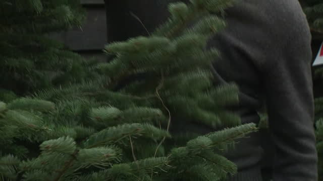 GBR: Christmas tree shops now allowed to open during lockdown