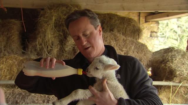 vídeos de stock e filmes b-roll de exterior shots of prime minister david cameron walking with a farmer in chipping norton and feeding a lamb with a milk bottle on april 02 2015 in... - chipping norton england