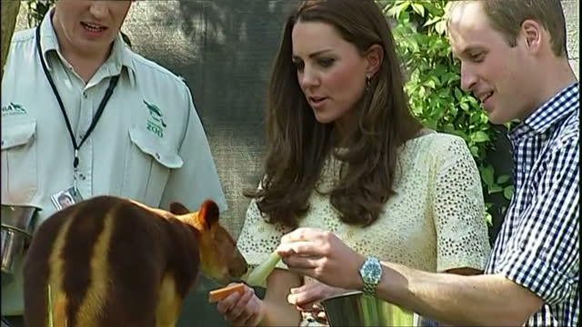 exterior shots of prince william and kate middleton feeding tree kangaroo in zoo enclosure on april 20 2014 in sydney australia - 2014 stock videos and b-roll footage