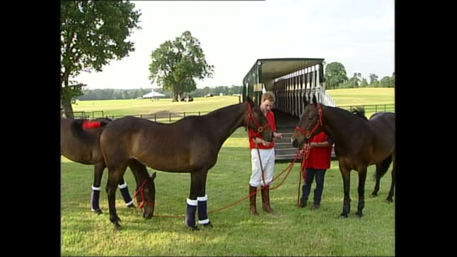 exterior shots of prince william feeding an apple to a horse after a polo match on 20 june 2003 in anglesea, wales, united kingdom - apple fruit stock videos & royalty-free footage