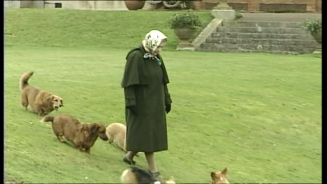 Exterior shots of Queen Elizabeth II walking around Buckingham palace gardens with Corgi dogs running around her feet