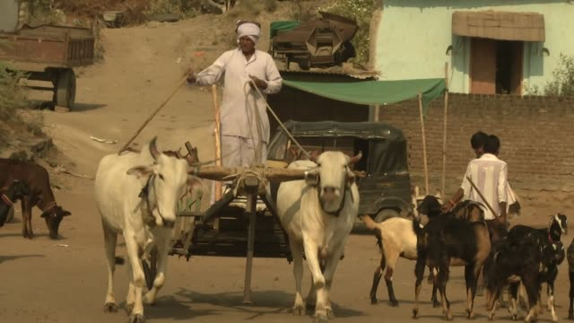 Exterior shots of rural farmers herding cattle through a small village setting on 4 April 2019 in Maharashtra India