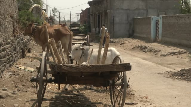 exterior shots of rural village life with villagers stood in doorways cattle by roadside and a few political flags ahead of the national elections on... - maharashtra stock-videos und b-roll-filmmaterial