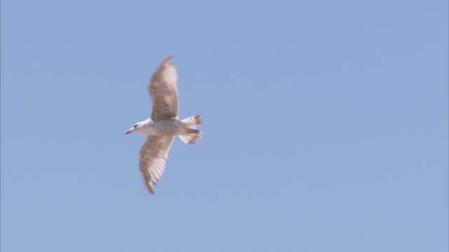 exterior shots of seagulls flying in a blue sky above a beach on 10 july 2015 in worthing, united kingdom - worthing点の映像素材/bロール