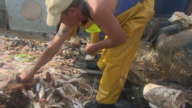 exterior shots of spanish fishermen on board a trawler off the costa blanca picking out rubbish and plastic waste amongst their catch on july 22 2017... - fisherman stock videos and b-roll footage