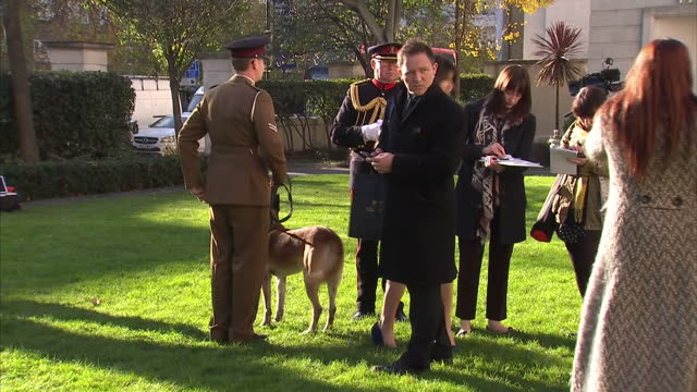Exterior shots of Special Forces dog Mali wearing a medal posing for photos with its handler Corporal Daniel Hatley on 17 November 2017 in London...