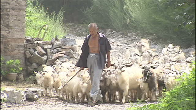 exterior shots of street scenes of villagers and farmers with cattle in an area suffering from drought in the run up to the beijing olympics on... - 河南省点の映像素材/bロール