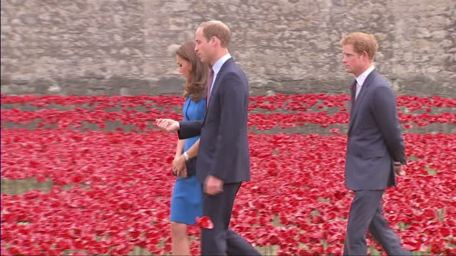 exterior shots of the duke and duchess of cambridge and prince harry walking through thousands of poppies in the ground at the tower of london,... - peerage title stock videos & royalty-free footage