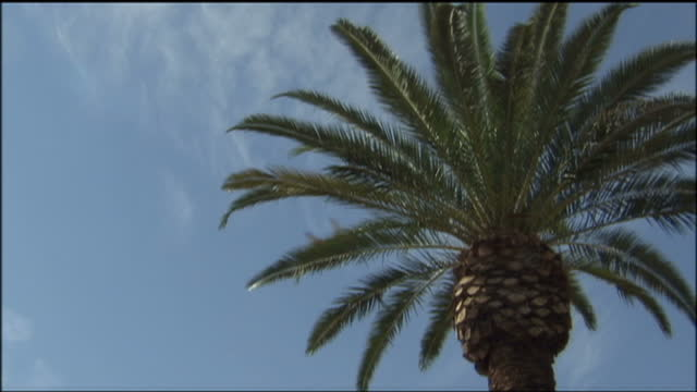 exterior shots of the fronds of a palm tree in las vegas a a plane from mccarran international airport passes overhead on august 29 2009 in las vegas... - blattfiedern stock-videos und b-roll-filmmaterial
