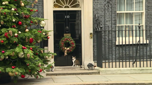 Exterior shots of the front door of Number 10 Downing Street with a Christmas tree outside and wreath hanging on the door and Larry the cat walking...