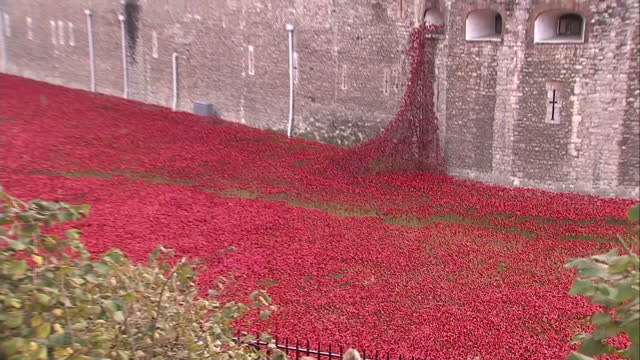 exterior shots of the poppy display in the moat of the tower of london with tourists around the walls taking photos on november 09 2014 in london... - armistice day stock videos and b-roll footage