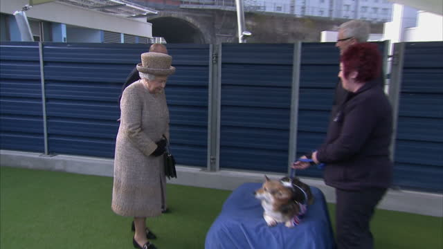 exterior shots of the queen accompanied by prince philip and prince michael of kent speaking to paul o'grady and a member of staff about a corgi... - paul o'grady stock-videos und b-roll-filmmaterial