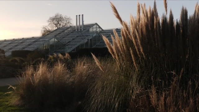 exterior shots of the royal botanic gardens kew on january 03 2020 london england - green stock videos & royalty-free footage