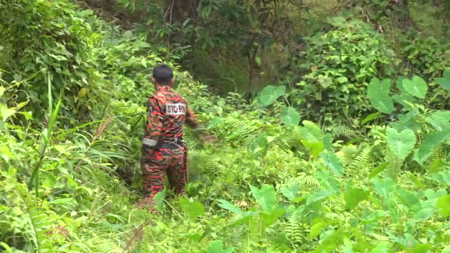 exterior shots of the various search teams searching in the malaysian jungle for missing girl nora quoirin on 9 august 2019 in negeri sembilian,... - tropical rainforest stock videos & royalty-free footage