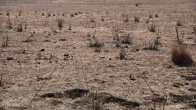 exterior shots of very dry barren arid land with minimal plantation dry californian drought land at uc santa barbara on january 17 2014 in santa... - plantation stock videos & royalty-free footage