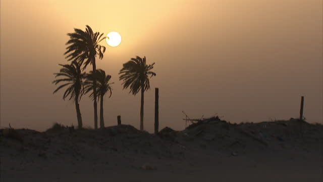 exterior shots of waves crashing on the beach and palm tree silhouettes with the sun in the background on june 12 2015 in zuwarah libya - romantic sky stock videos & royalty-free footage