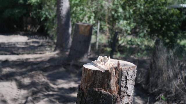 exterior shots of woodland in braunschweig, near the former home of madeleine mccann suspect christian b on 11 september 2020 in braunschweig, germany - マデリン・マクカーン失踪事件点の映像素材/bロール
