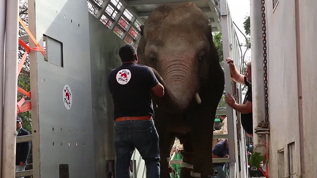 exterior shots of zoo workers in pakistan moving kaavan the elephant, who became known as the world's loneliest elephant, after singer cher... - elephant stock videos & royalty-free footage