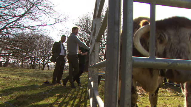 Exterior shots Prince Harry at conservation project in Epping Forest talking to tree surgeon next to English Longhorn cow in foreground in Epping...
