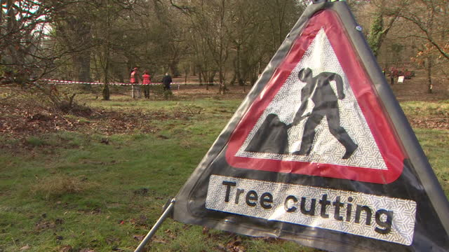 exterior shots red triangle warning road sign for 'tree cutting' with anonymous tree surgeons working in the background in epping forest england on... - road warning sign stock videos & royalty-free footage