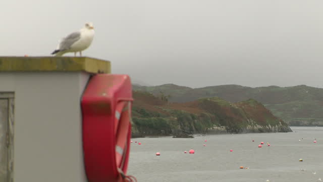 Exterior shots seafront at Baltimore County Cork seagull fishing ships sailing in calm waters ahead of Hurricane Ophelia in Baltimore County Cork...