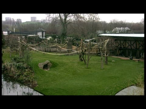 exterior shots various of duke of edinburgh touring new gorilla enclosure at london zoo greeting staff - enclosure stock videos and b-roll footage