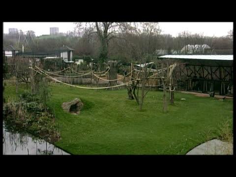 stockvideo's en b-roll-footage met exterior shots various of duke of edinburgh touring new gorilla enclosure at london zoo greeting staff - omsloten ruimte