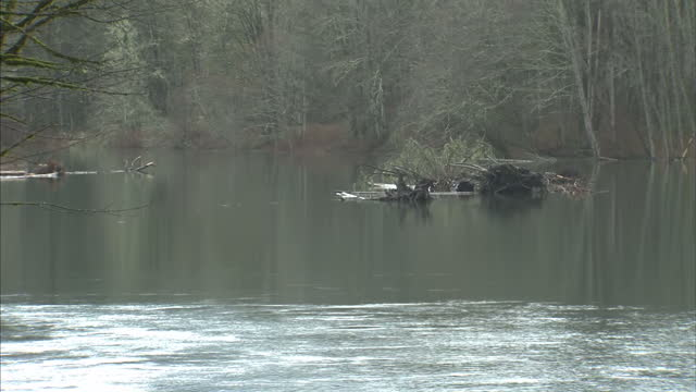 stockvideo's en b-roll-footage met exterior shows wilderness in oso forests and stream in area of huge mudslide on march 20 2014 in oso washington - oso washington