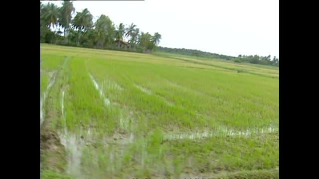 exterior tracking shots from a vehicle driving through farmland and villages near hambantota in the aftermath ofthe tsunami including scenes with... - strohhut stock-videos und b-roll-filmmaterial