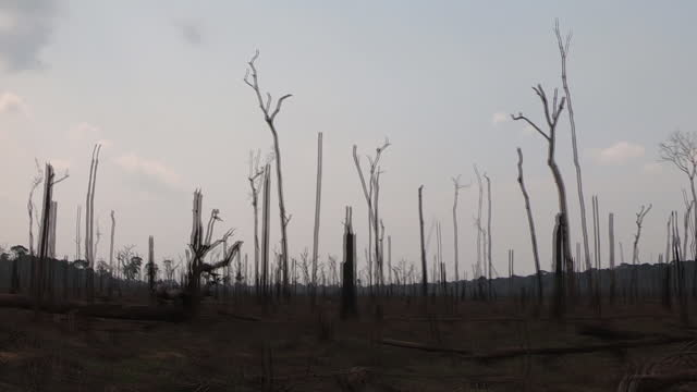 stockvideo's en b-roll-footage met exterior tracking views shot from a car showing remains of trees and the aftermath of wildfires in the amazon rainforest as smokes is seen in the... - boomstronk