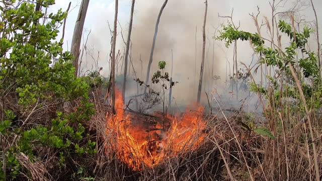 stockvideo's en b-roll-footage met exterior views of a fire breaking out in the amazon rainforest and surrounded by burnt out remains of trees on 27 august 2019 in labrea, brazil - boomstronk