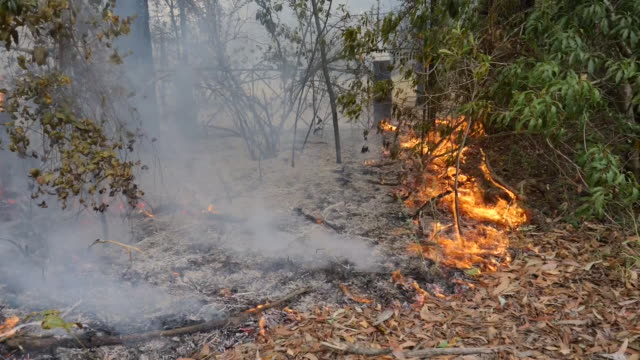 stockvideo's en b-roll-footage met exterior views of fires burning by side of road and firefighters trying to put out the fires in new south wales in bilpin in sydney on 22 december... - sydney australië