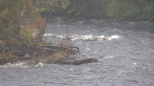 exterior views of high water level and windy conditions on the river tay in perthshire including fast flowing water and a on october 12 2018 in... - perthshire stock videos & royalty-free footage