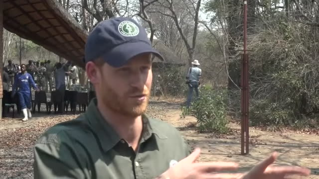 exterior views of prince harry being interviewed about his environmental and conservation concerns at liwonde national park, on 30 september 2019 in... - malawi stock videos & royalty-free footage
