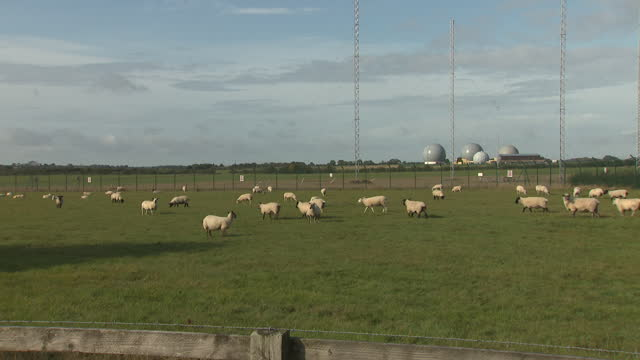 exterior views of raf croughton, showing buildings and sheep grazing with satellite radomes in the distance on 9 october 2019 in banbury, united... - grazing stock videos & royalty-free footage