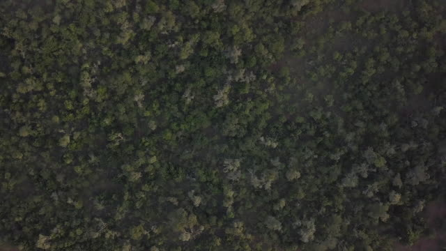 exterior wide rising drone shots of the grasslands in kenya, africa on the 3rd of august 2017. - plain stock videos & royalty-free footage