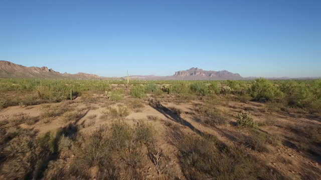 exterior wide shot of cactus plants tilting up to a wide shot of the desert on october 15 2016 in arizona united states - arizona cactus stock videos & royalty-free footage