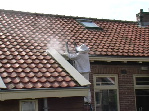 exterminating a wasp nest - stinging stock videos & royalty-free footage