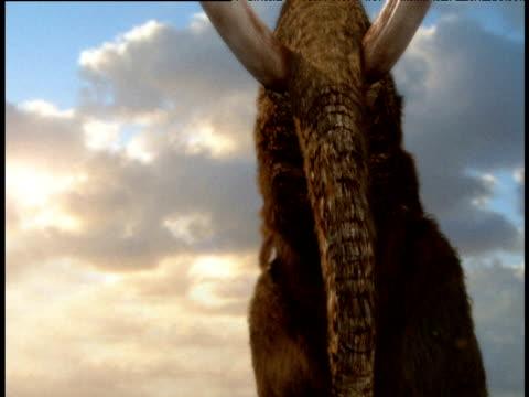 stockvideo's en b-roll-footage met extinct bull mastodon bellows against sky - neus van een dier