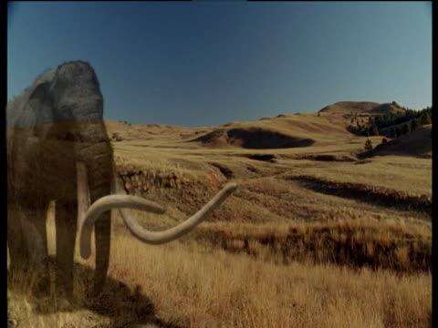 Extinct mammoth fades in and walks past on Ice Age prairie, North America