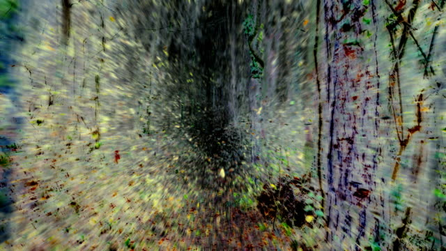 extraordinary walk-lapse : path through deciduous forest, autumn - art (fade in/out) - fade out stock videos & royalty-free footage