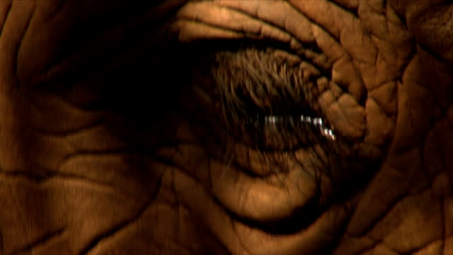 stockvideo's en b-roll-footage met extreme cu of an elephants eye/ etosha national park/ namibia - supersensorisch
