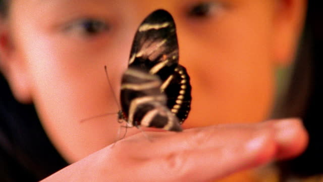 extreme close up Asian girl looking at zebra butterfly on finger