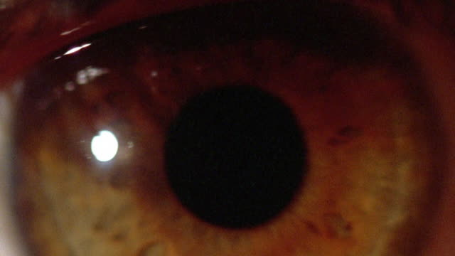 vídeos de stock e filmes b-roll de extreme close up eye blinking - olhos castanhos
