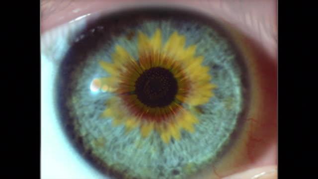 vídeos de stock e filmes b-roll de extreme close up eye with sunflower superimposed on it - filme colagem