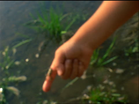 extreme close up finger of boy lifting tiny frog from pond / it starts crawling up his hand / Oregon