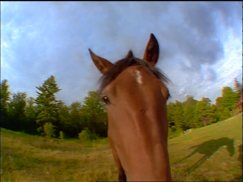 extreme close up fisheye brown horse standing in field sticking nose into camera - fischaugen objektiv stock-videos und b-roll-filmmaterial