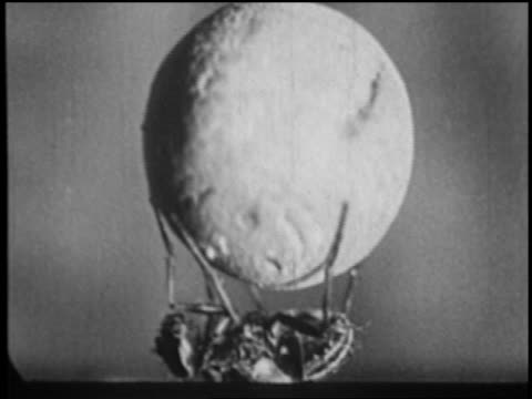 b/w 1930 extreme close up fly lying on back juggling tiny ball, throwing it in air + catching it - palla sportiva video stock e b–roll