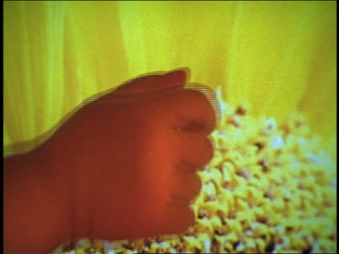 extreme close up hand of baby touching computer screen with picture of yellow flower - 人間と機械点の映像素材/bロール